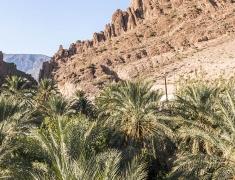 A grove of date palms below the rocks