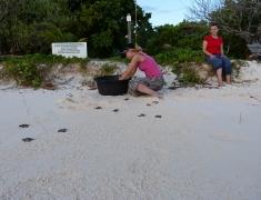 Vypouštění mladých želviček do moře