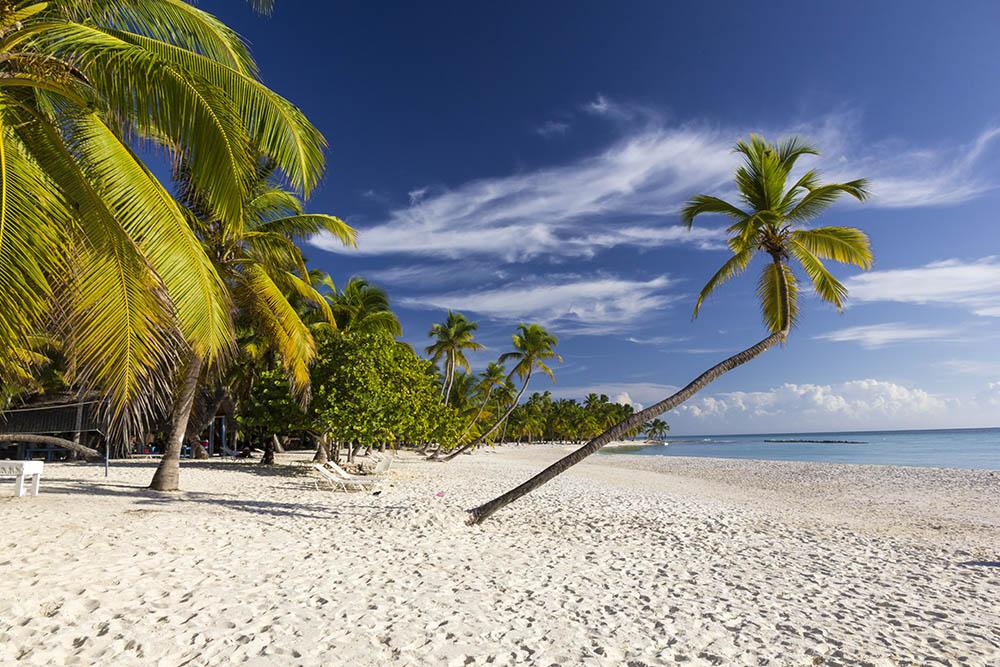 Isla Saona Beach with Palm
