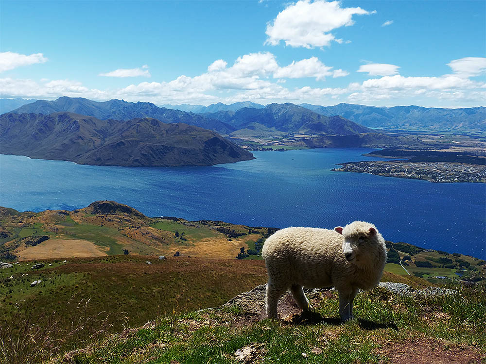 top 10 most beautiful places in new zealand e t abroad