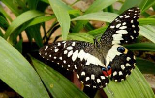 Motýl na listu