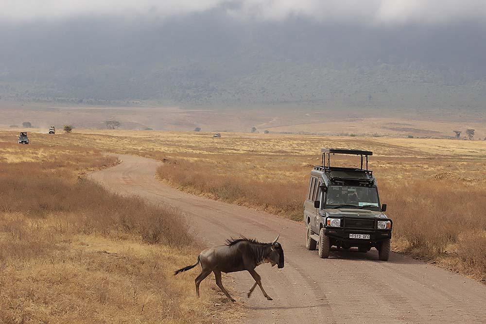 Safari in Ngorongoro crater
