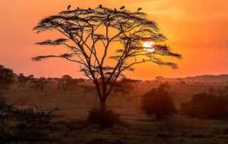 Serengeti national park sunset