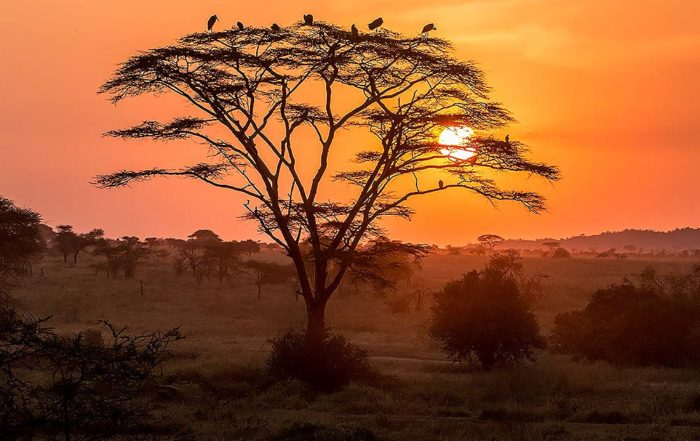Serengeti national park sunset