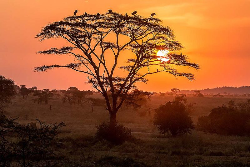 Velké pulzující ptáky