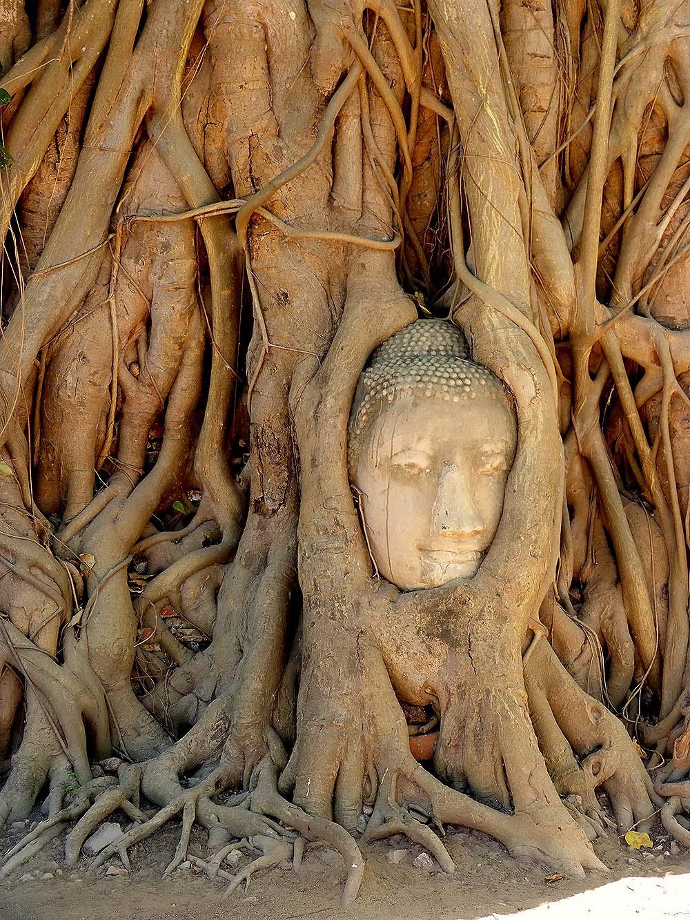 Wat Mahathat – Head of Buddha