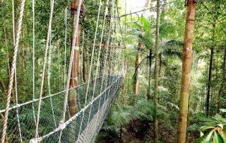 Canopy Walkway in Taman Negara