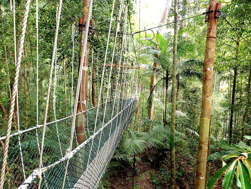 Canopy Walkway in Taman Negara & P13d10188-800x602.jpg
