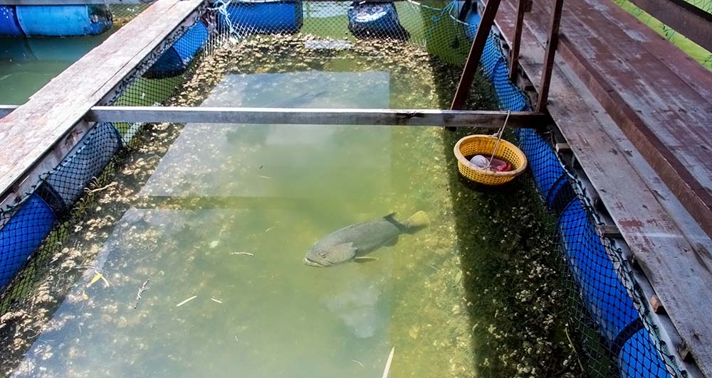 We were also looking at the fish pens