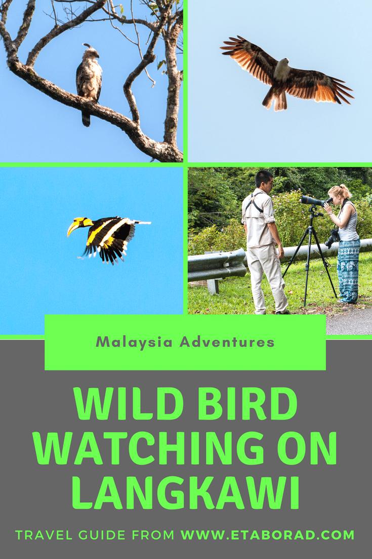 Bird Watching in Lankgkawi