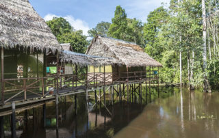 Accomodation in the jungle