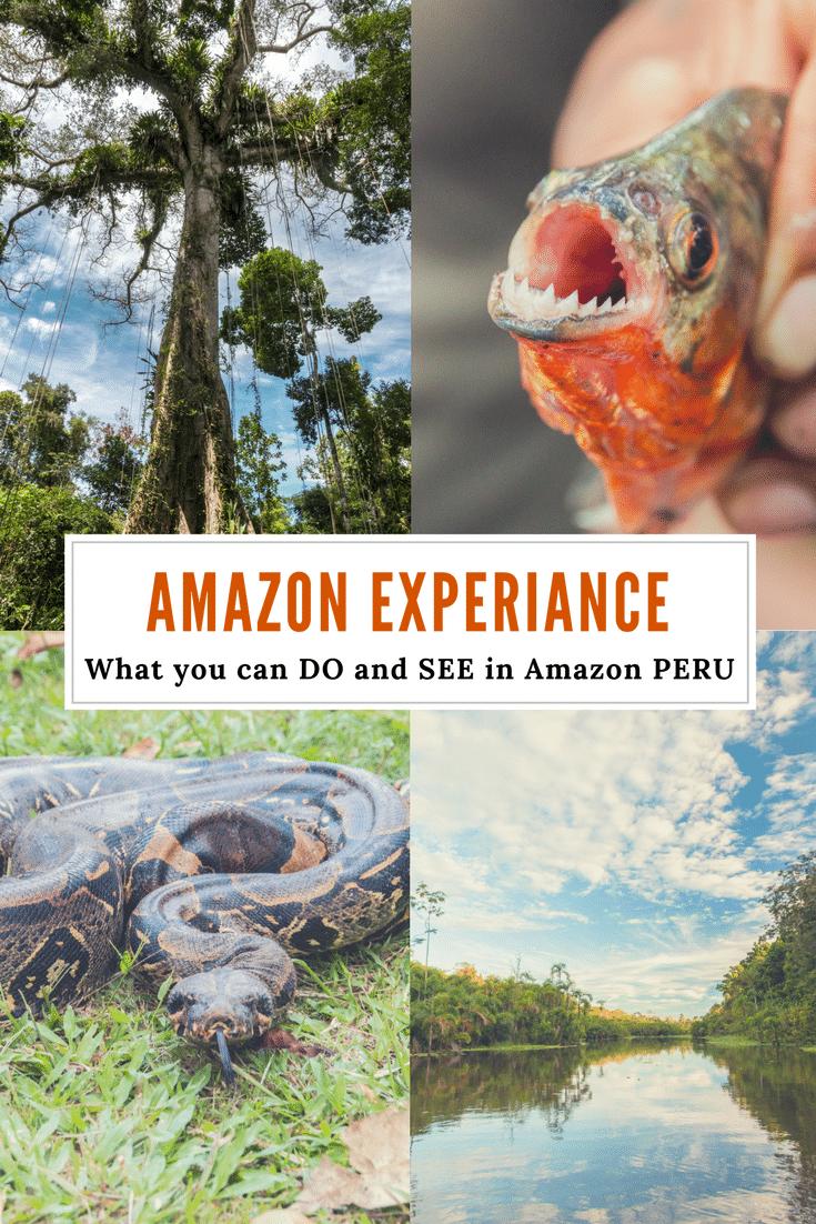 Amazon Experiance