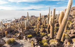 Incahuasi Island at Uyuni Salt Flats Bolivia