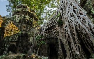 Ta Prohm | Angkor Wat