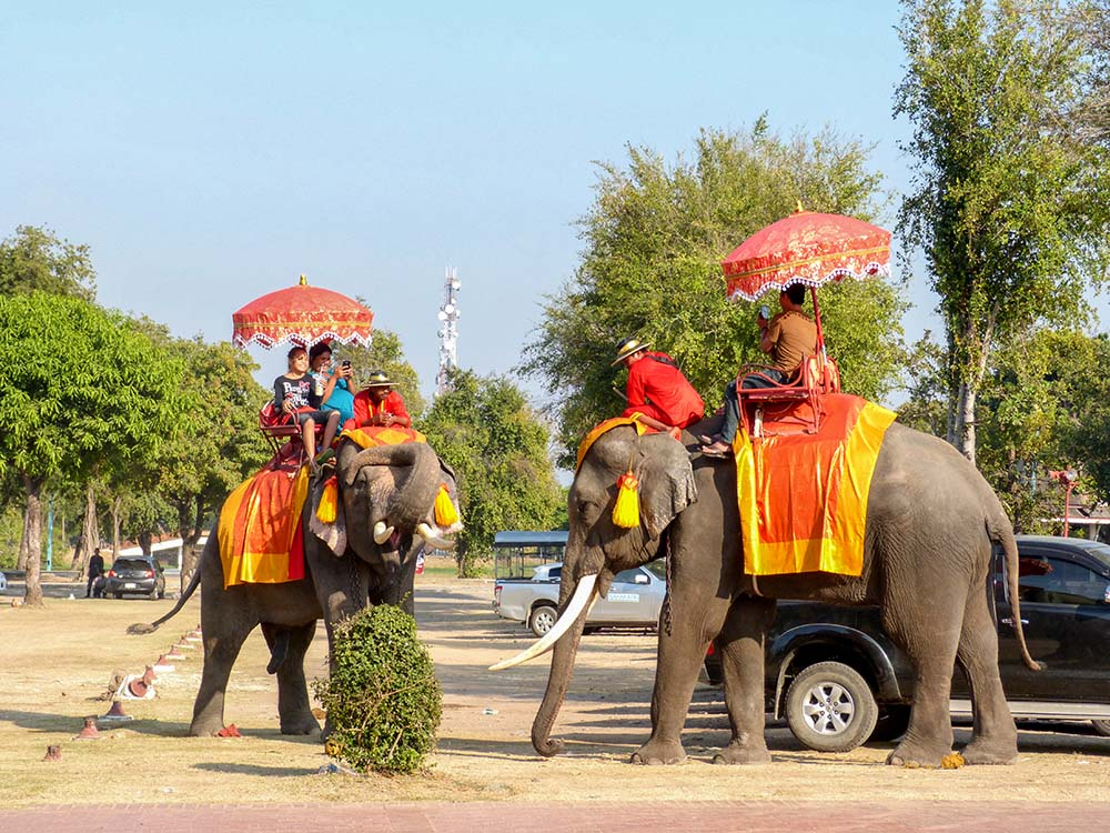 Elephants in Ayutthaya serve as a transport for tourists