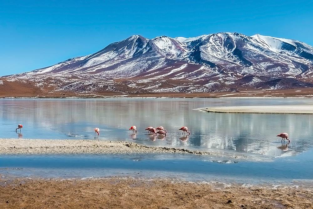 Laguna Hedionda s plameňáky, Bolívie