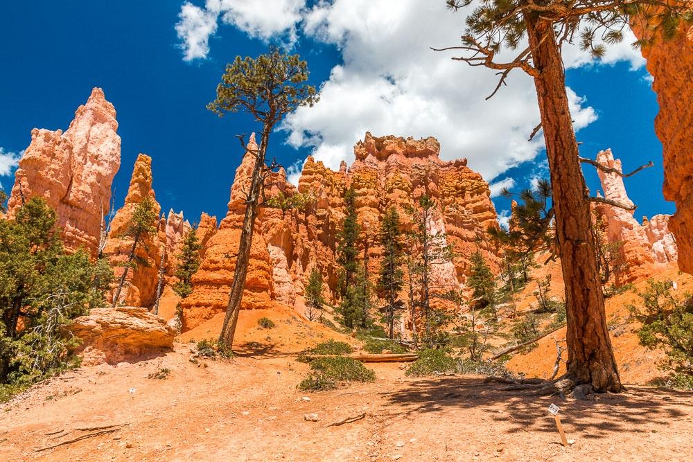 Bryce Canyon Navajo Loop Trail