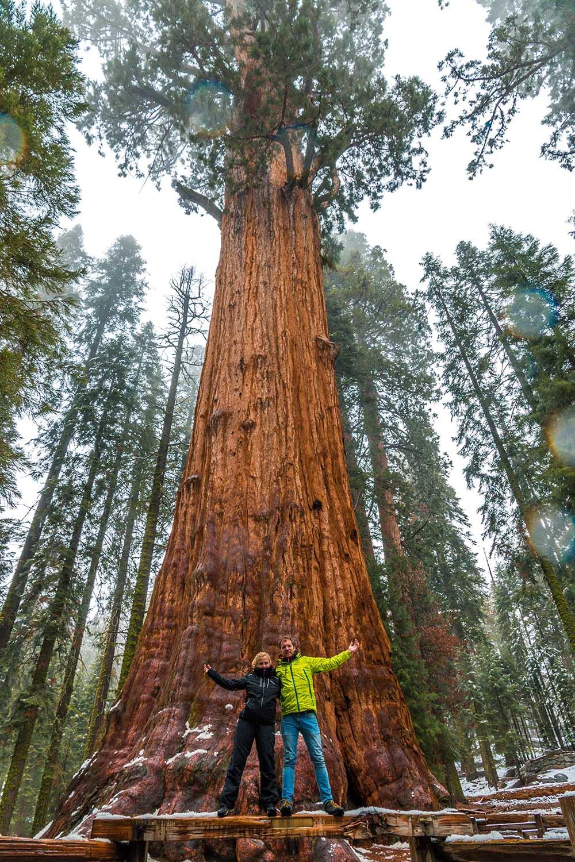 Strom generála Shermana - největší sekvoj na světě