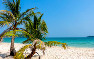 Koh Rong, Cambodia, beach and palms